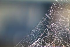 蓝色虚拟蜘蛛色彩万维网 图库摄影