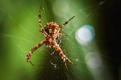 蓝色虚拟蜘蛛色彩万维网 免版税图库摄影