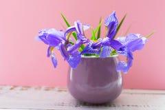 蓝色虹膜花花束在一个小杯子的在柔和的桃红色背景 免版税库存照片