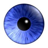 蓝色虹膜 免版税库存照片
