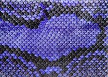 蓝色蛇皮,背景的皮革纹理 免版税图库摄影