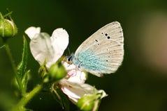 蓝色蝴蝶绿色下面 免版税库存照片