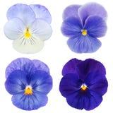 蓝色蝴蝶花集 库存图片