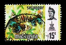 蓝色蝴蝶花(摘要orithya ssp wallacei),雪兰莪serie,大约1979年 免版税库存照片
