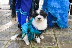 蓝色被打扮的狗 免版税库存照片