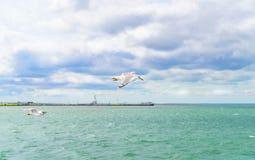 蓝色覆盖了天空,清楚的海水,全景地平线 免版税库存图片