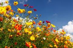 蓝色覆盖五颜六色的天空白色野花 免版税库存图片
