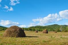 蓝色覆盖在天空的绿色干草堆小山 免版税图库摄影