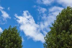 蓝色覆盖天空和绿色叶子 库存图片