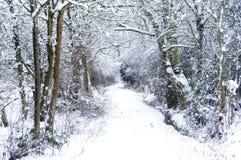 蓝色覆盖天空雪棍子 图库摄影