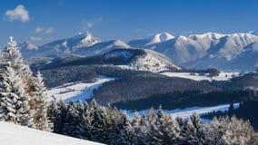 蓝色覆盖天空雪棍子 免版税图库摄影