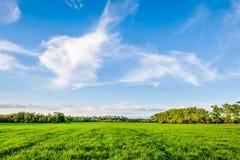 蓝色调遣绿色天空 免版税库存图片