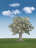 蓝色货币天空结构树 免版税图库摄影