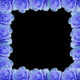 蓝色边界玫瑰色向量 皇族释放例证