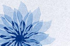 蓝色透明花 库存图片