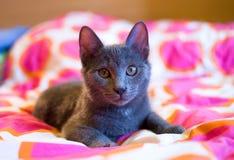 蓝色逗人喜爱的小猫俄语 免版税库存照片