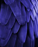 蓝色金刚鹦鹉羽毛 免版税库存图片