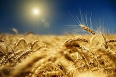 蓝色金天空麦子 图库摄影
