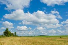 蓝色金天空麦子 免版税库存图片