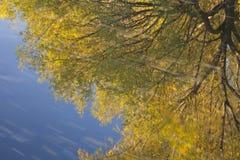 蓝色金子反映水 免版税库存图片