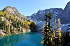 蓝色金黄湖落叶松属线索结构树 库存照片
