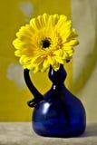 蓝色钴雏菊gerber大丁草花瓶黄色 免版税库存照片