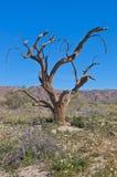 蓝色铁木树天空结构树 免版税库存照片