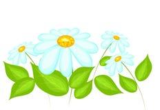 蓝色雏菊开花天空黄色 库存例证