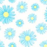 蓝色雏菊春黄菊开花无缝的样式 库存照片