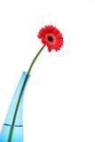 蓝色雏菊gerber玻璃桃红色花瓶 免版税库存图片