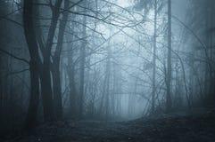 蓝色雾在有雾的一个黑暗的森林里在晚上 免版税库存图片