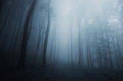 蓝色雾在黑暗的神奇森林里在万圣夜 免版税库存照片