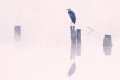 蓝色雾极大的苍鹭 库存照片