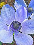 蓝色颜色花 图库摄影