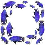 蓝色鱼框架 免版税图库摄影
