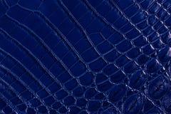 蓝色鳄鱼皮革纹理 免版税库存图片