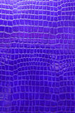 蓝色鳄鱼皮革 图库摄影