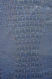 蓝色鳄鱼皮革 免版税库存图片