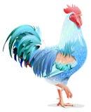 蓝色鸟公鸡 蓝色雄鸡标志2017年 免版税库存照片