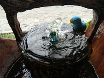 蓝色鸟和瀑布 库存图片