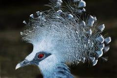 蓝色鸟纵向  免版税库存照片