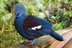 蓝色鸟 免版税库存照片