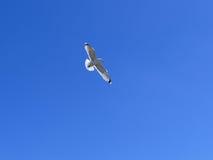 蓝色鸥海运天空 库存照片