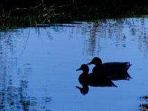 蓝色鸭子剪影 免版税库存图片