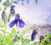 蓝色鸽子似花在庭院里,定调子 库存图片