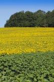 蓝色黄绿色 库存图片