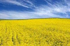 蓝色黄色 免版税库存图片