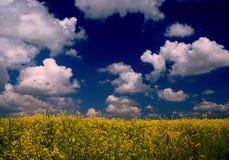 蓝色黑暗的黄色 库存图片