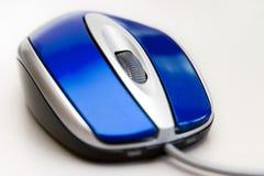 蓝色鼠标 库存照片