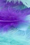 蓝色,绿色和紫色工艺用羽毛装饰背景 库存图片